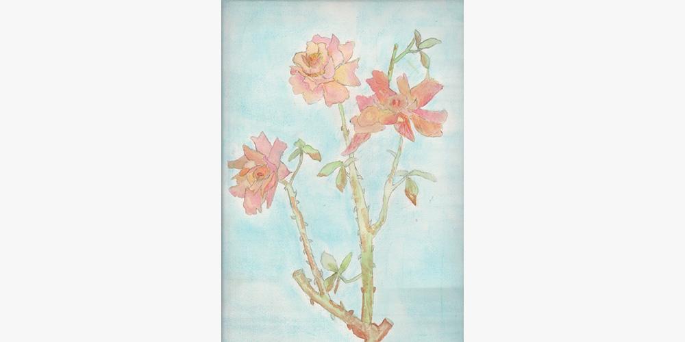 14.-rose-chiara-bbis