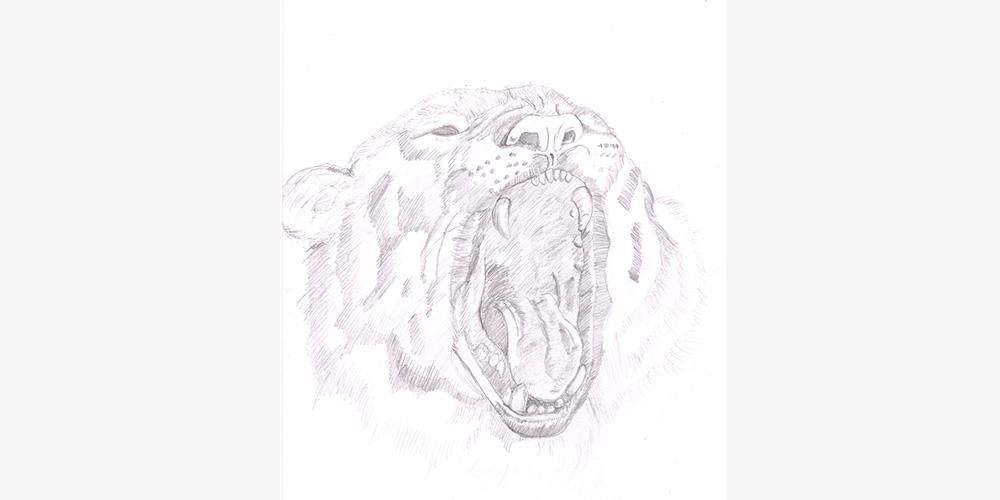 3.löwe--kimi