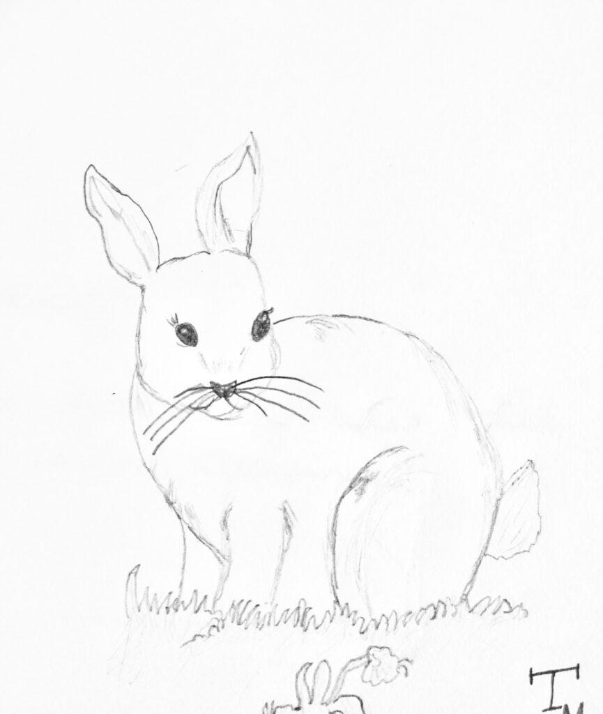 Kinder Zeichnen Hase Bleistift